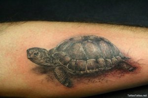 Turtle Tattoos Designs If you have ever seen some of the turtle tattoos out