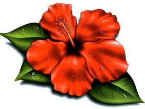 Let's look at some flower options for your tattoo. Hibiscus Flower