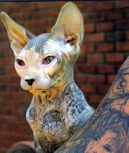 Tattoo'd Pets (Not Tattoos of Pets)